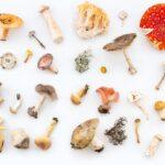 Phytothérapie : connaissez-vous ce champignon tibétain ?